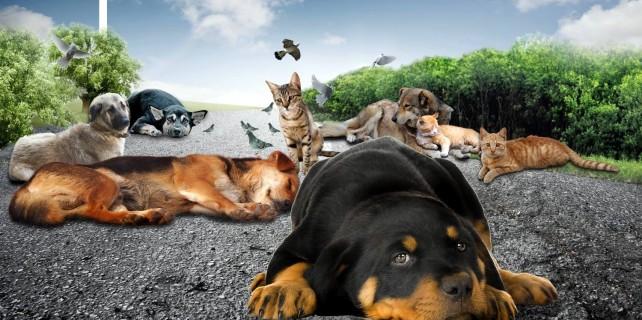 Sokak hayvanlarına yıldırım şefkati