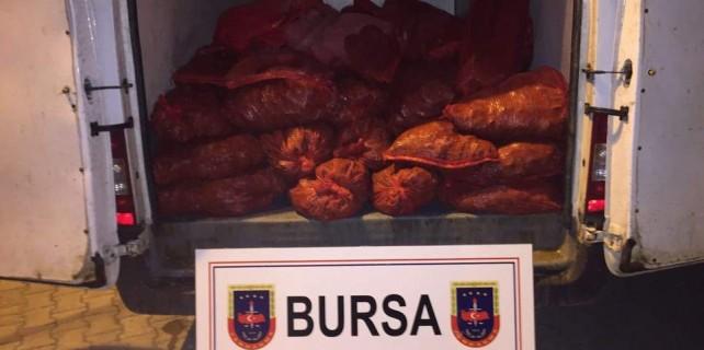 Bursa'da 1100 kilogram yakalandı...