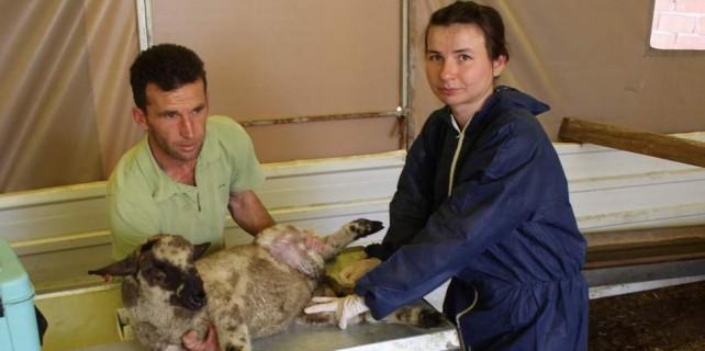 Bursa'da hayvanların hayatını kurtaran uygulama