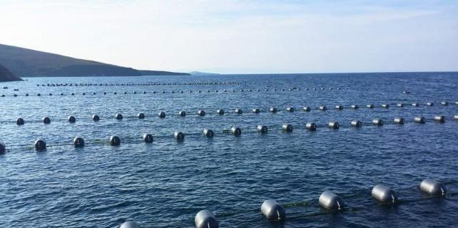 Bursa'nın sahillerinde büyük tehlike...