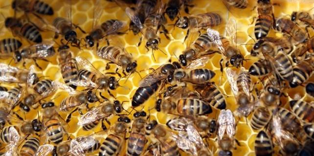 Bursa'da katil arılar can aldı