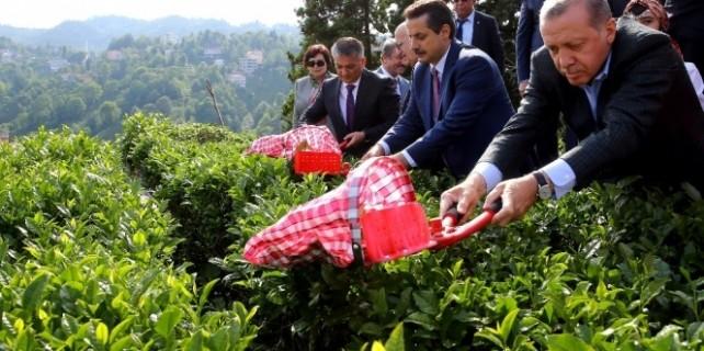 Erdoğan çay kesti, eski günleri hatırladı