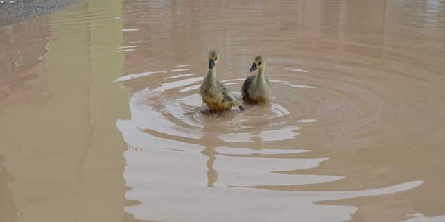 Yollar göle döndü ördekler yüzdü...