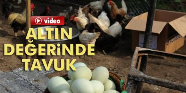 Altın değerinde tavuk
