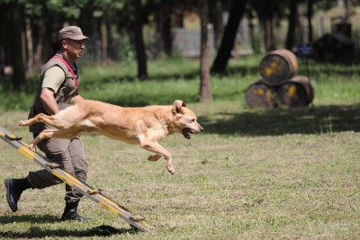 köpek arama kurtarma