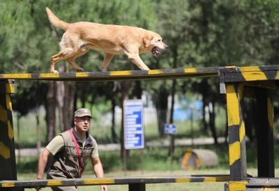 arama kurtarma köpeği1