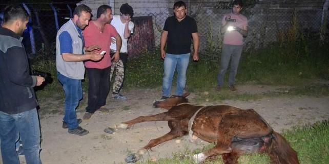 Bursa'da acı kaza...