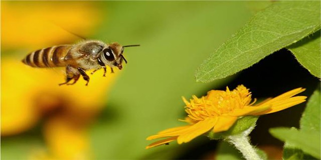 Katil arılarla etkin mücadele