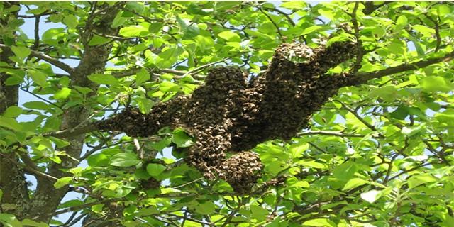Dağ yöresinde arı bereketi
