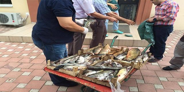 Bursa'da kaçak balık operasyonu