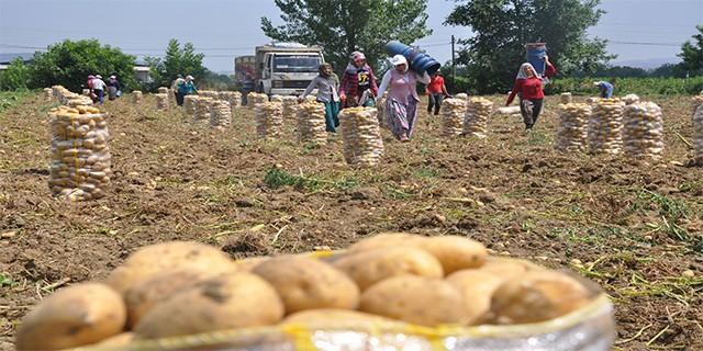 Patates üretimi sancılı başladı