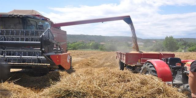 Buğday hasadı bereketli başladı