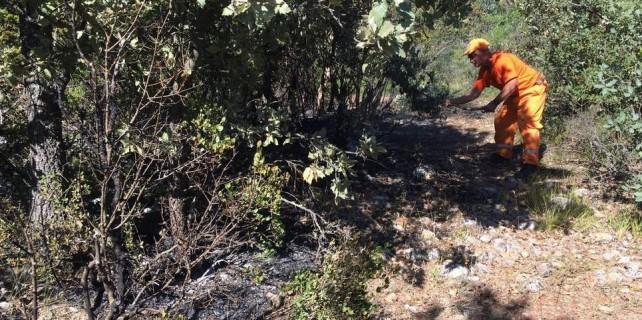Bursa'da defineciler ormanı yaktı