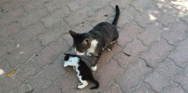 Kedi de olsa o bir anne!