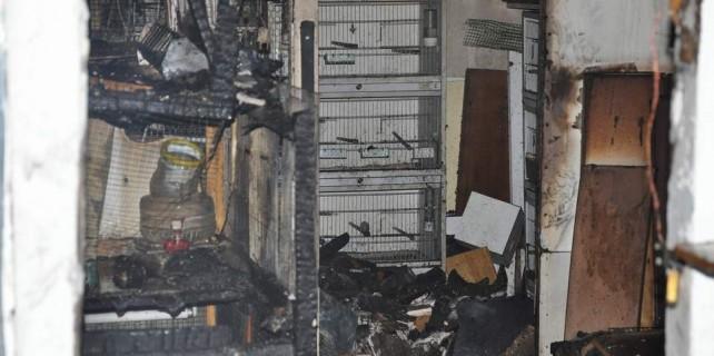 Bursa'da kuş pazarında yangın...Yüzlercesi telef oldu