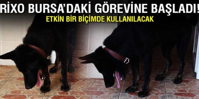 Bursa'ya yeni bombacı köpek