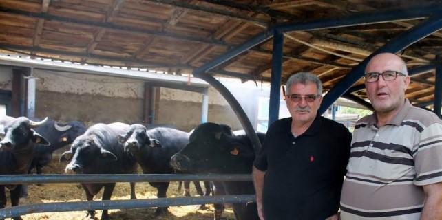 İtalyan peynirleri Bursa'da üretiliyor