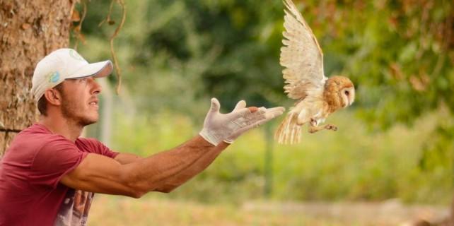 Yavru baykuşlar yuvadan işte böyle uçtular