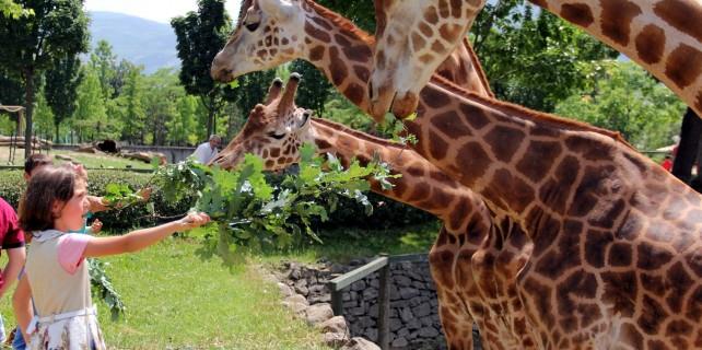 Bursa'da zooparkta sürpriz