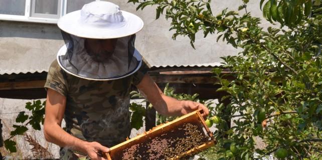 Katil arılar bakın ne yaptı? Türkiye'de ilk...