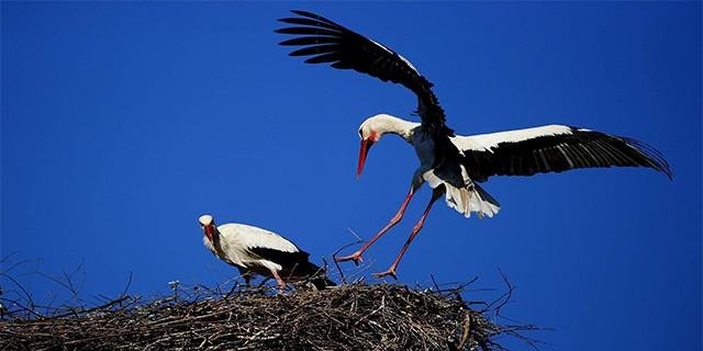 UEDAŞ'dan 'kuşları koruma' zorunluluğu