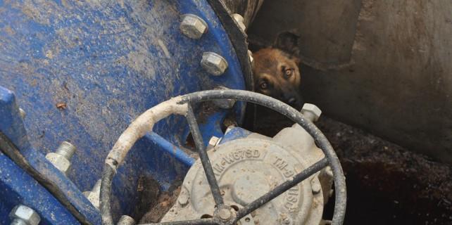 Bursa'da kanala düşen köpek böyle kurtarıldı