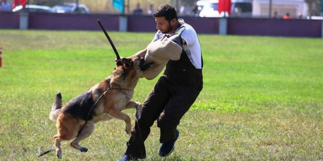 Alman köpekleri sokak hayvanları için yarıştı