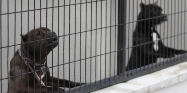 Bursa'daki köpek kavgasına tahliye
