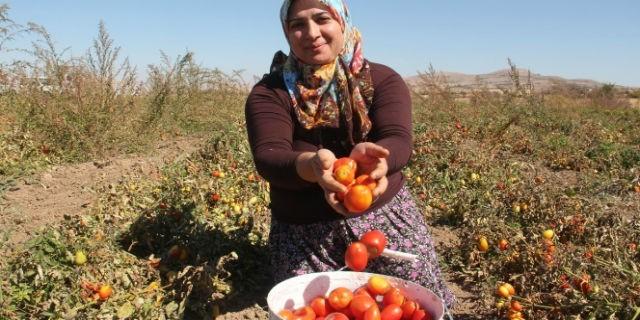 Türkiye'de kadın çiftçilerden bir ilk!