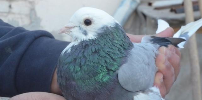 Bu kuşlar çok pahalı..?