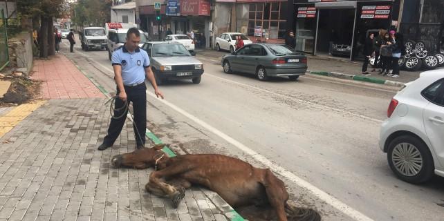 Bursa'da at açlıktan yere yığıldı