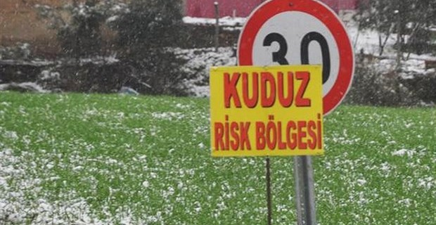 Bursa'da kuduz karantinası!