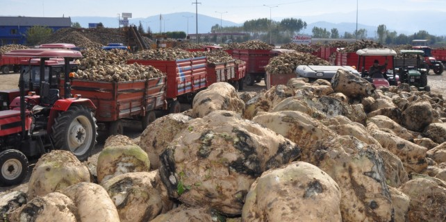 Bursa'da pancar üreticileri tepkili