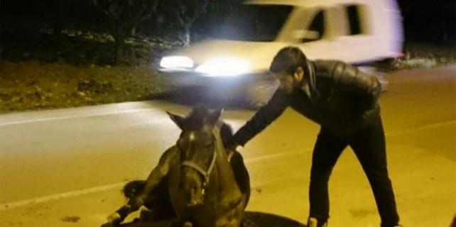Bursa'da at kazası...