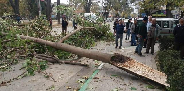 Bursa'da fırtına yıktı geçti...