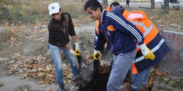 Bursa'da 10 Kasım törenlerine domuz şoku