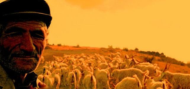Çoban Erdoğan'a Bursa çağrısı