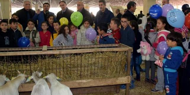 Koyun keçi festivalinde renkli görüntüler