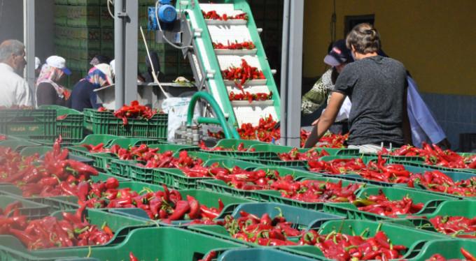 Tonlarcası Bursa'dan ihraç ediliyor