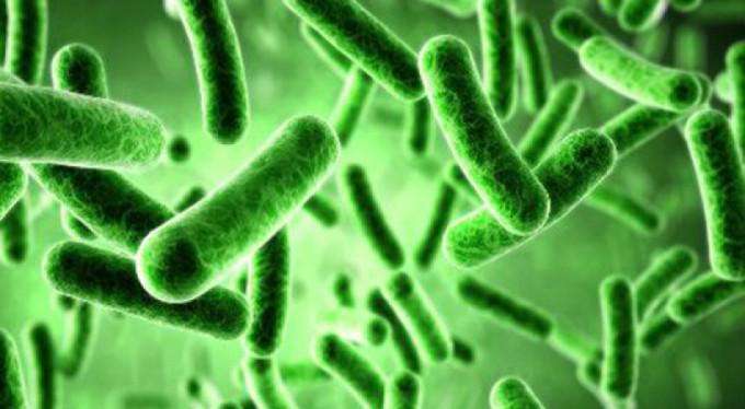Yararlı bakterilerin faydaları neler?