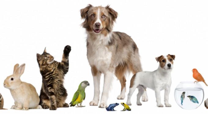 Evcil hayvanlarla ruh sağlığınızı düzeltin