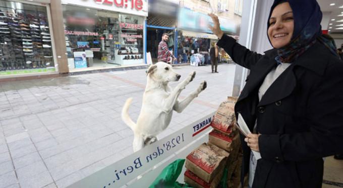 Türkiye bu sevimli köpeği konuşuyor!