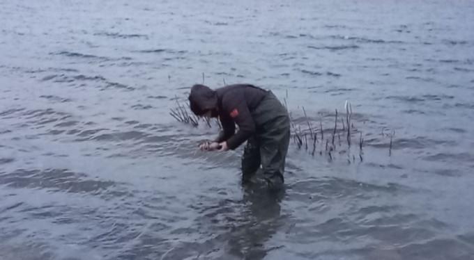 Büyük tehlike! O gölü istila etti...
