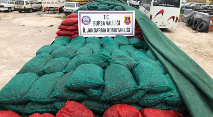 Bursa'da kaçak midye alarmı!