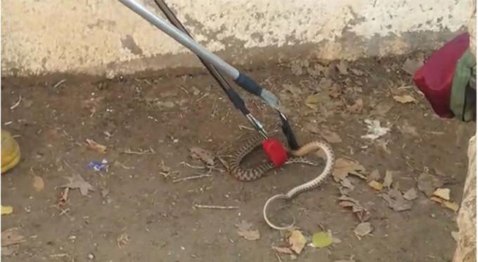Okulda yılan paniği