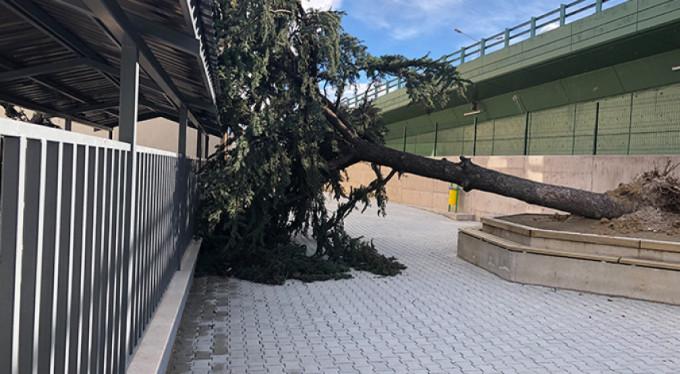 Bursa'da lodos ağacı devirdi!