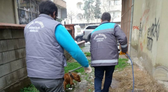 Bursa'da pitbull operasyonu!