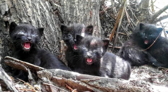 Bursa'da yavru kedi seferberliği!