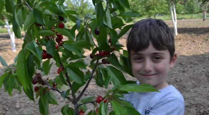 Bursa'da hasat başladı