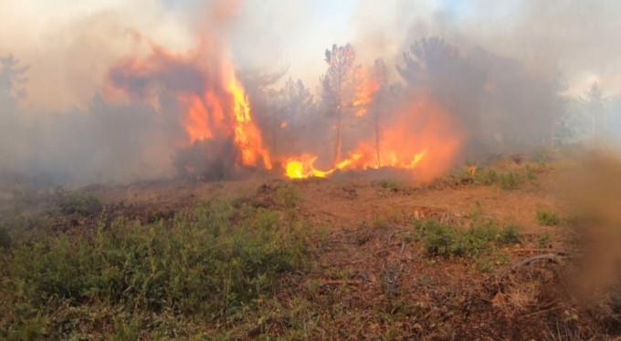 Bursa'daki orman yangını kontrol altına alındı!